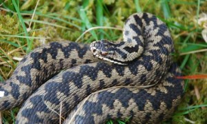 Adder-health-check-007-300x180